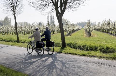 Sint-Niklaas Waasland Fruitroute fietsen wandelen